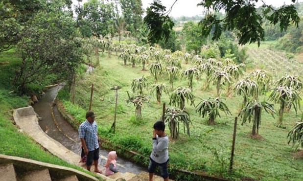 Kebun durian warso farm Bogor
