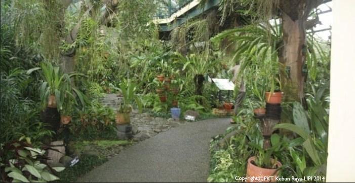 Tempat wisata di Bogor 01 Kebun Raya Bogor