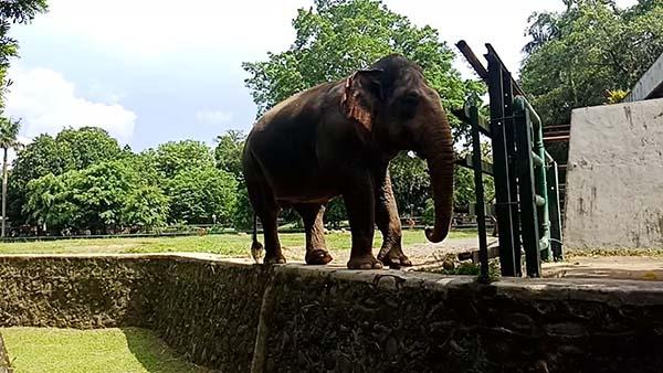 obyek wisata jakarta selatan kebun binatang ragunan
